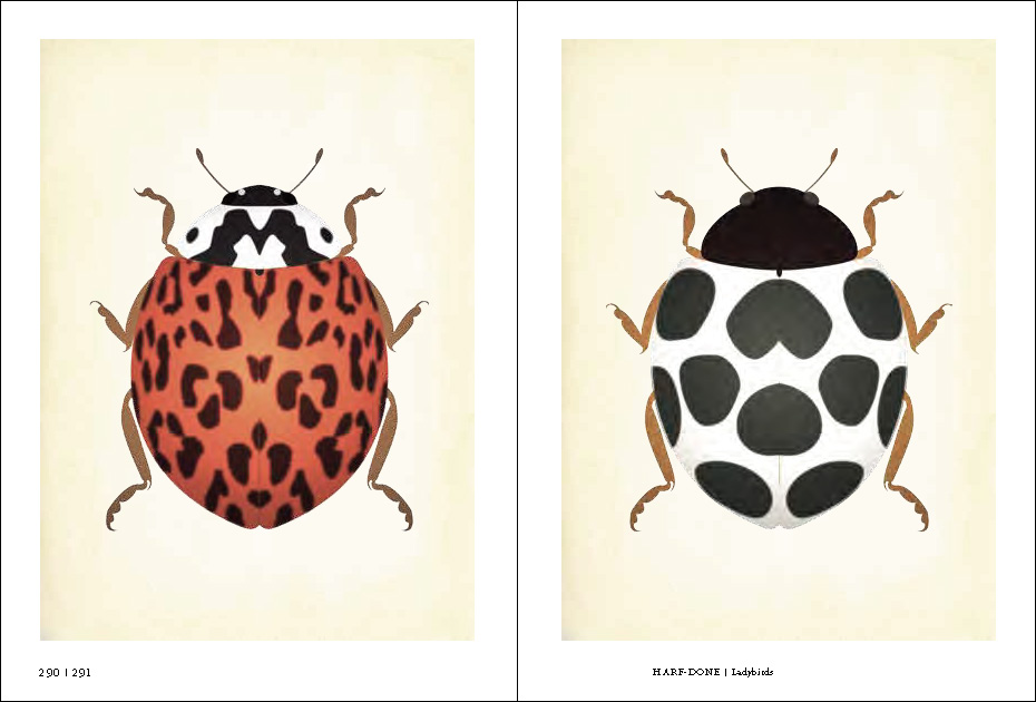 'Ladybirds' by Eriko Akata, as featured in Ex-formation by Kenya Hara
