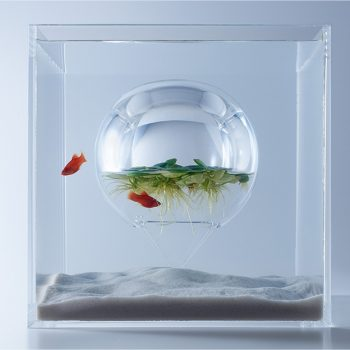 Aquarium Ferns Grow Inside an Air Bubble Within This Radical Fish Tank
