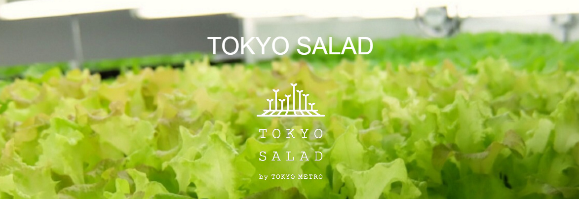 Tokyo Salad (1)