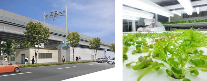 Tokyo Salad (4)