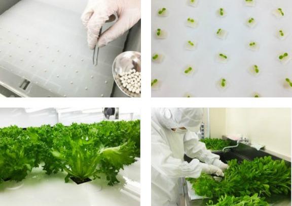 Tokyo Salad process