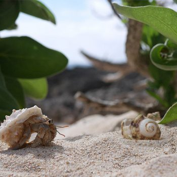 A Real Estate Company Created New Homes for Hermit Crabs