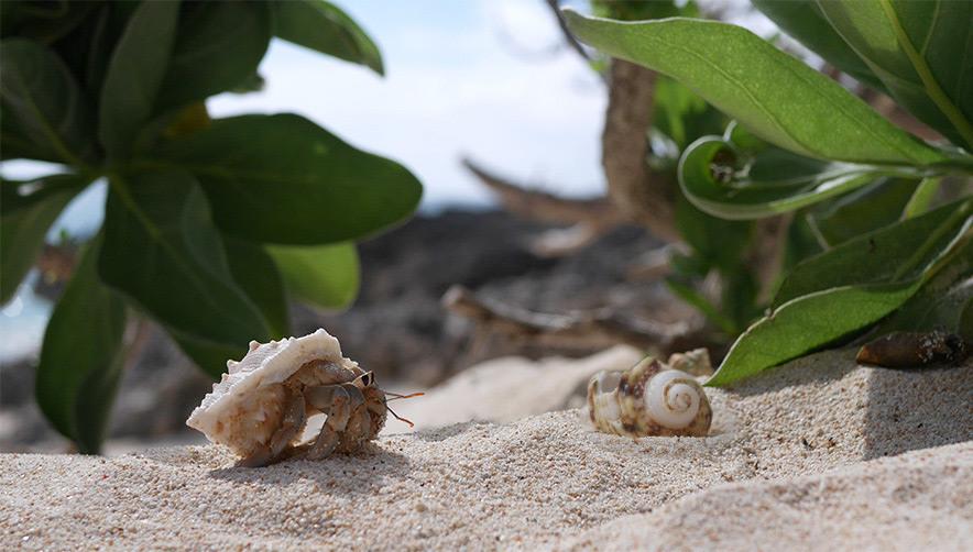 suumo hermit crab img_02