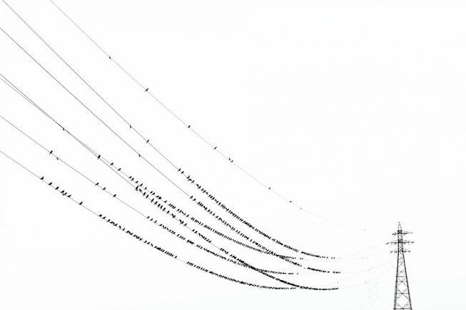 yoshinori mizutani kawau birds