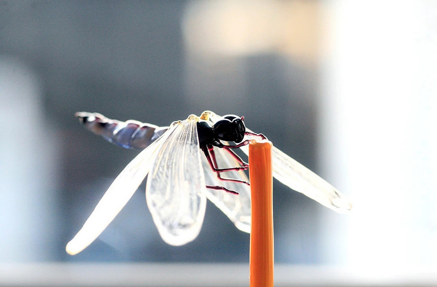 Realistic Glass Insects Sculpted to Scale by Yuki Tsunoda