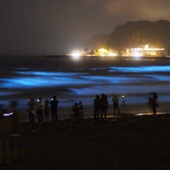 Bioluminscent Sea Sparkle Lights Up the Waves of Yuigahama, Kamakura