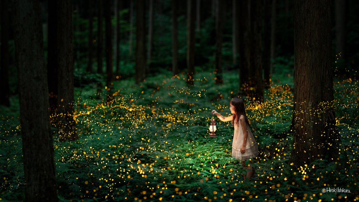 Photographs of Fireflies at Night by Hiroki Ishikura