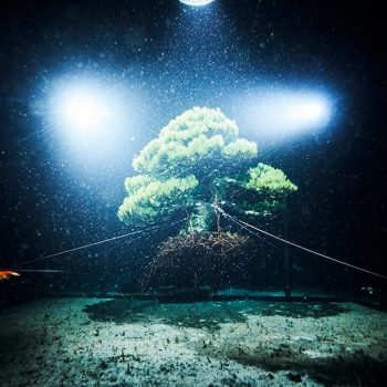 Makoto Azuma Plunges Bonsai into the Depths of the Sea