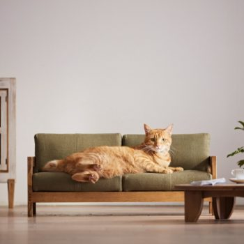Okawa City Launches Line of Miniature Cat Furniture
