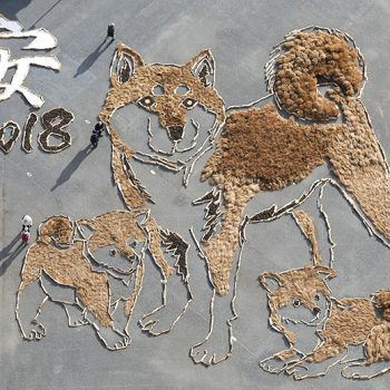 Shiba-inu Geoglyph Made Entirely From Natural Materials