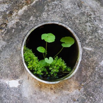Miniature Gardens Inside the Drainage of Japanese Retaining Walls