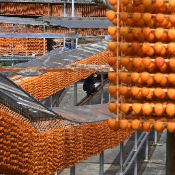 Peak Persimmon Drying Season Drapes Orange Curtains Throughout Wakayama