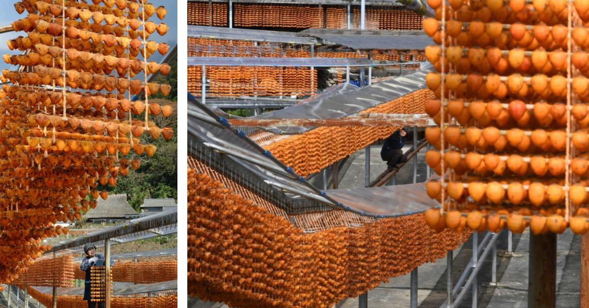 Peak Persimmon Drying Season Drapes Orange Curtains Throughout Wakayama