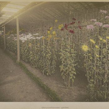 Hand-Colored Photographs from the Late 1800s by Ogawa Kazumasa