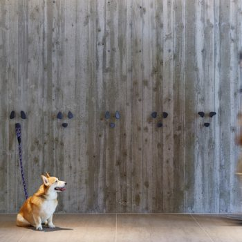 Dogs More Than Welcome at Japan's Regina Resorts