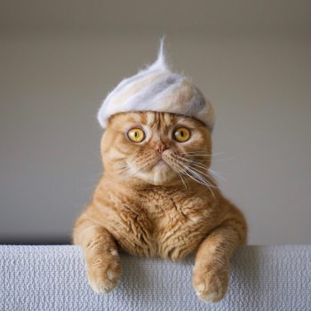 Nukege Hats: Hats for Cats, Fashioned Out of Their Own Shed