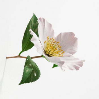 Yoshihiro Suda's Intimate, Wood-Carved Flowers