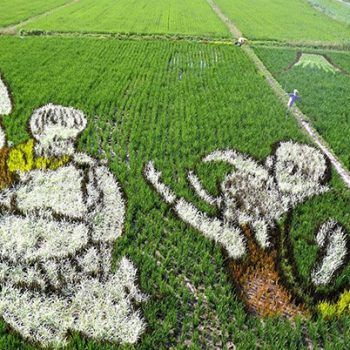 Illustrator Yuki Omura, Victim of the Kyoto Animation Arson, Remembered Through Rice Paddy Art