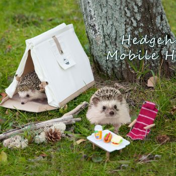 Hedgehog Mobile Home Lets You Carry Your Pet Pygmy Wherever You Go