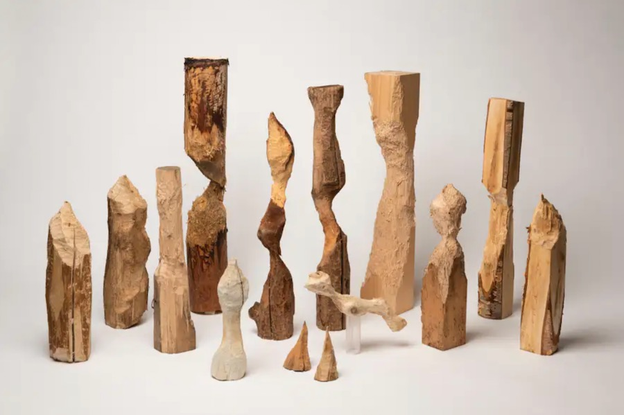 Aki Inomata Collaborates with Beavers to Create Sculptures that Question the Artistic Process